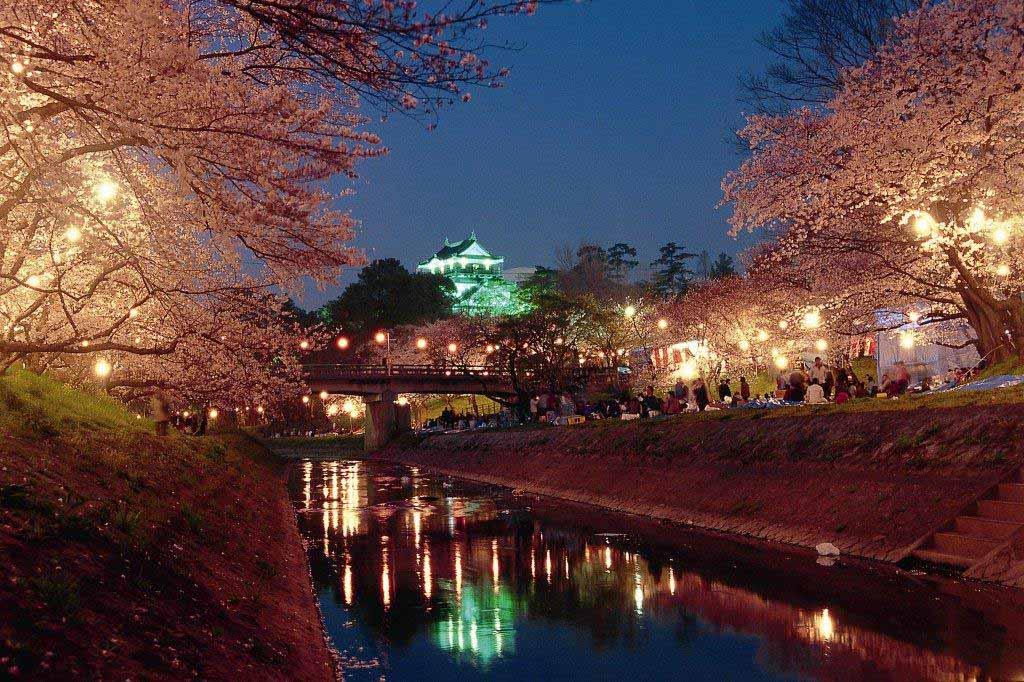 日本賞櫻-岡崎公園