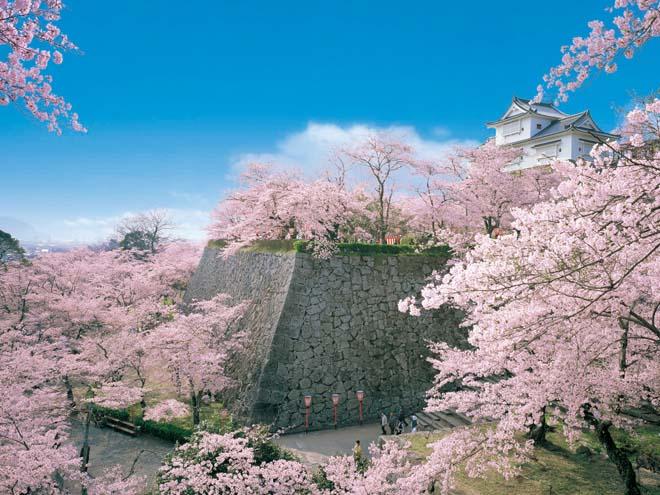 日本賞櫻-津山城櫻花