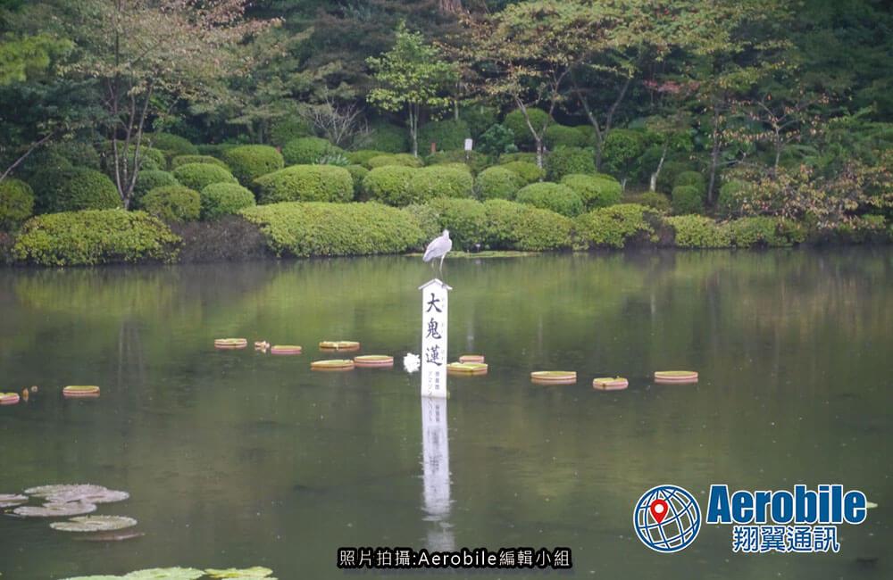 九州別府地獄溫泉遊記-海地獄|日本親子自駕自由行