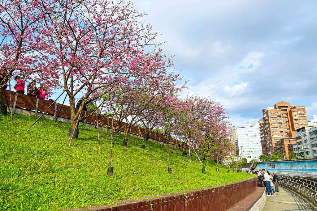 樂活公園 - 櫻花